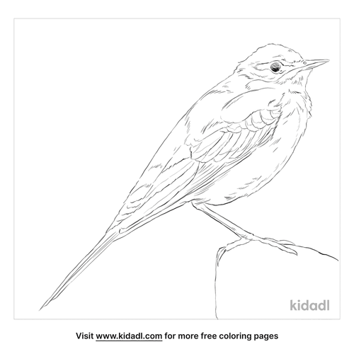 western-yellow-wagtail-coloring-page