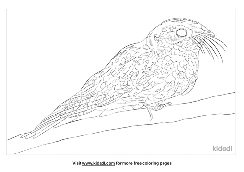whippoorwill-coloring-page