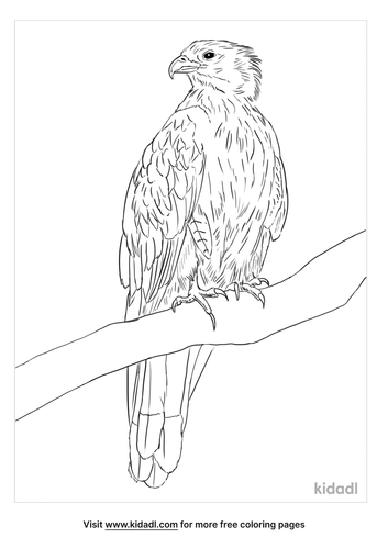whistling-kite-coloring-page
