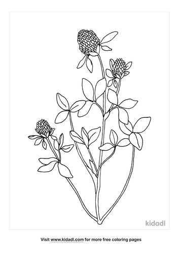 white clover-coloring-page-1-lg.png