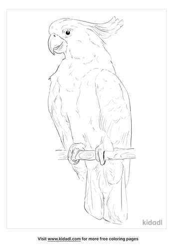 white-cockatoo-coloring-page