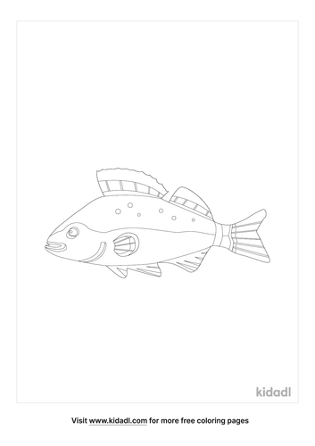 white-perch-coloring-page-1-lg.png