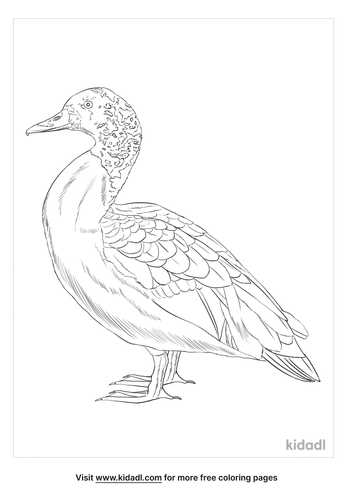 white-winged-duck-coloring-page