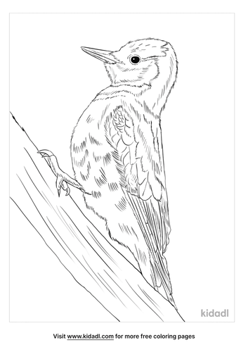 white-woodpecker-coloring-page