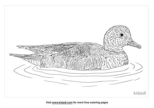 wigeon-coloring-page
