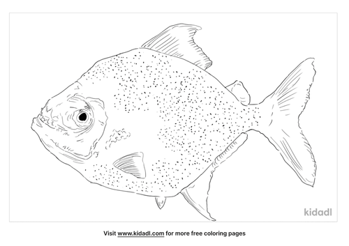 wimple-piranha-coloring-page