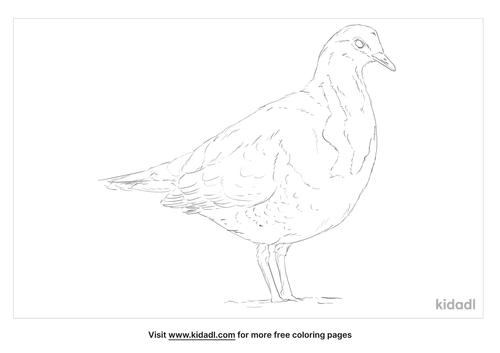 wonga-pigeon-coloring-page