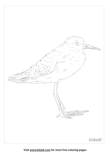 wood-sandpiper-coloring-page