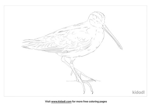 wood-snipe-coloring-page