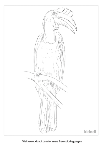 wrinkled-hornbill-coloring-page