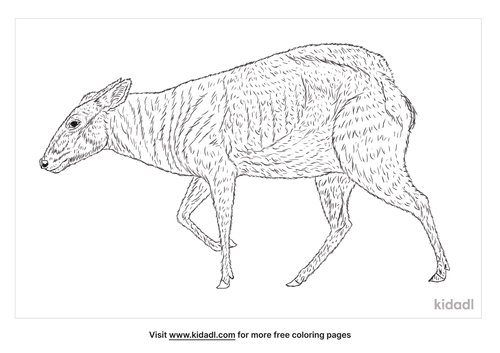 yellow-backed-duiker-coloring-page