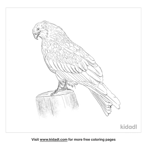 yellow-billed-kite-coloring-page