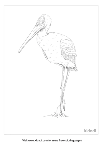 yellow-billed-stork-coloring-page