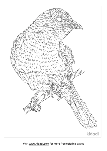 yellow-breasted-chat-coloring-page