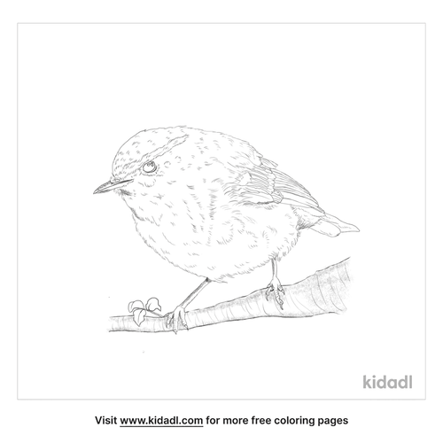 yellow-browed-warbler-coloring-page