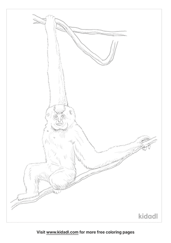 yellow-cheeked-gibbon-coloring-page