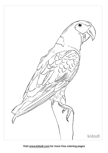 yellow-collared-macaw-coloring-page