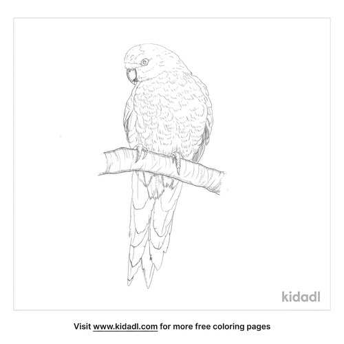 yellow-crowned-parakeet-coloring-page