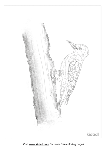 yellow-crowned-woodpecker-coloring-page