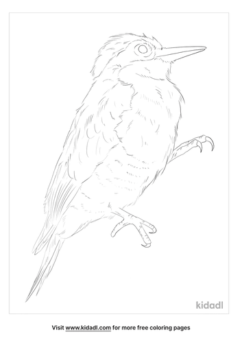 yellow-fronted-woodpecker-coloring-page