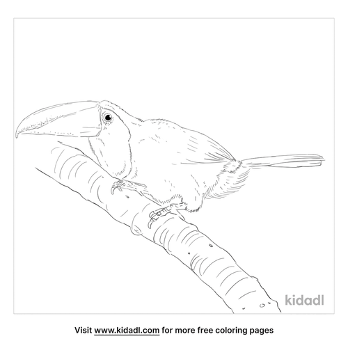 yellow-throated-toucan-coloring-page