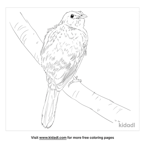yellow-vented-bulbul-coloring-page