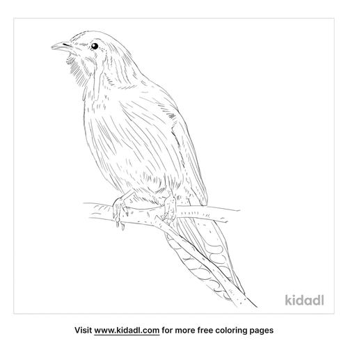yellow-wattlebird-coloring-page