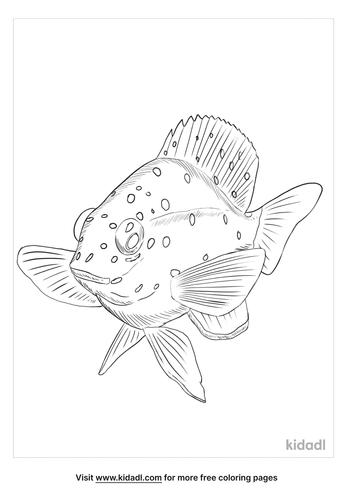 yellowtail-damselfish-coloring-page