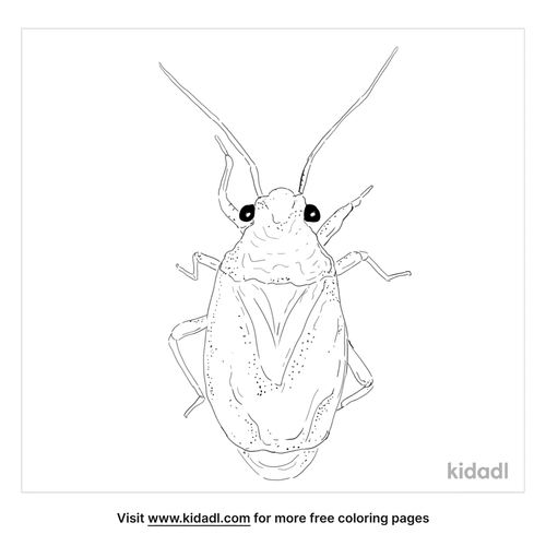 yucca-plant-bug-coloring-page
